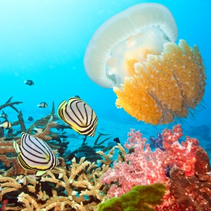 Diving Photography of Marine Wildlife